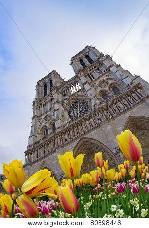 facade of Notre Dame  Paris, France