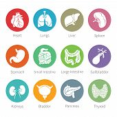 stock photo of flat stomach  - Vector icon set of human internal organs like heart spleen lungs stomach thyroid intestine bladder gallbladder pancreas kidneys and liver in flat style - JPG