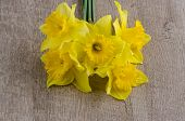 image of jonquils  - Beautiful yellow jonquil flowers on wooden background - JPG