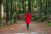 stock photo of overcoats  - Young woman walking away alone on a forest path wearing a red overcoat - JPG