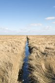 stock photo of dune grass  - Dune grass and ditch in northern Germany on a sunny day with blue sky - JPG