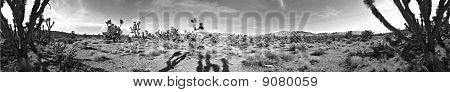 Jaegers Joshua Tree Black and White panorama