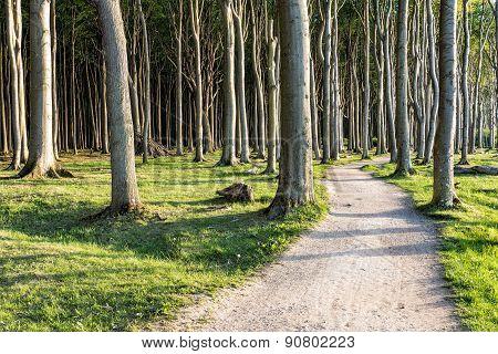 Coastal Forest On The Baltic Sea Coast In Nienhagen