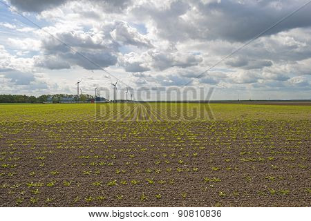 Vegetables growing on a field under a cloudy sky