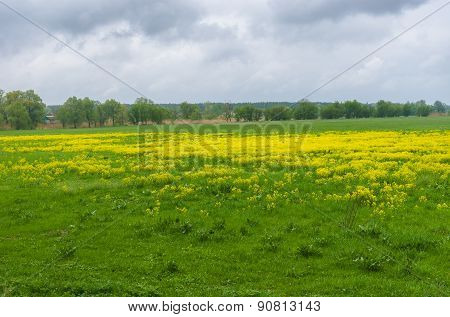 Landscape with water-meadow at rainy day