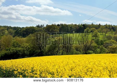 Cotswolds Rapeseed Field And Woodland