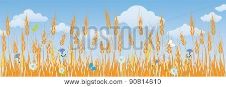 Field of ripe wheat ears