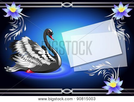 Black Swan On Blue Background And Paper For Your Text