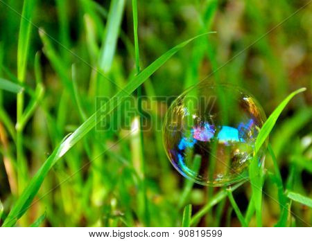Translucent bubble in the grass
