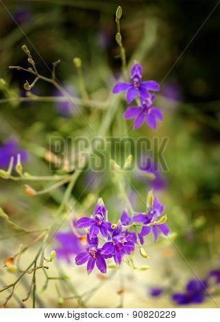 Lilac Wild Flowers On A Beach
