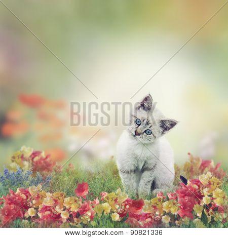 Cute White Kitten in Flowers