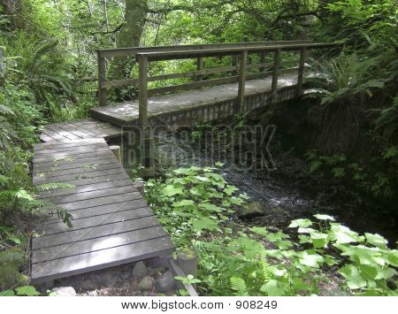 Forest_Footbridge