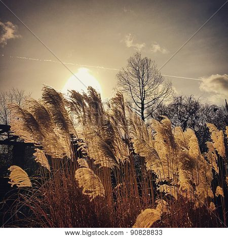 Long Grains in the sunshine