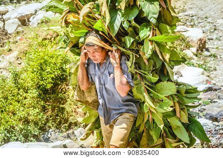 Man In Nepal Carrying Greens For Domestic Animals
