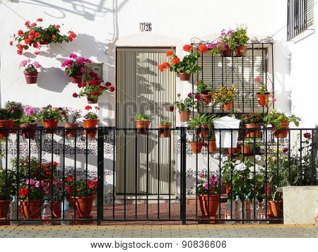 Front Garden With Flowers