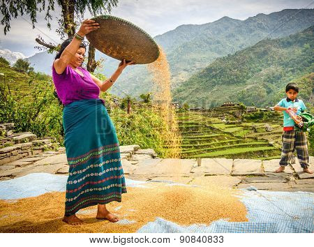 Women Farmer Is Separating Good Rice From The Bad One In Nepal