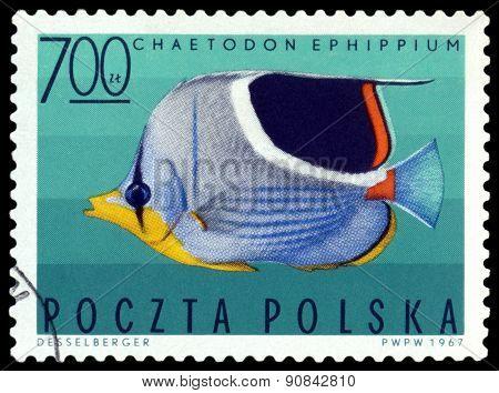 Vintage  Postage Stamp. Saddleback Butterflyfish.