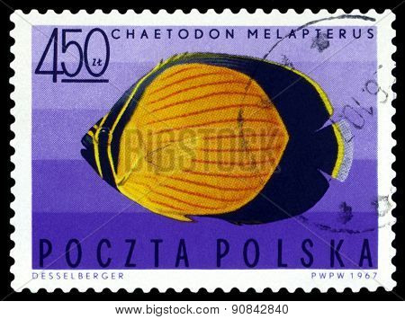 Vintage  Postage Stamp. Black-eye Butterflyfish.