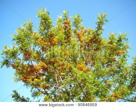 Trees With A Bright Flowers
