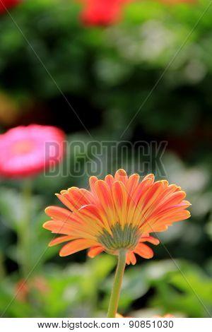 Pretty flowers in a garden