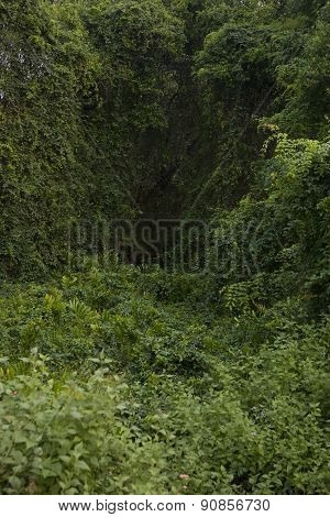 Deep Forest, Lush Tropical Rainforest In North India, Background