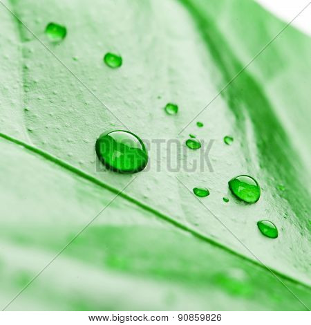 fresh green plant leaf with water drops close up