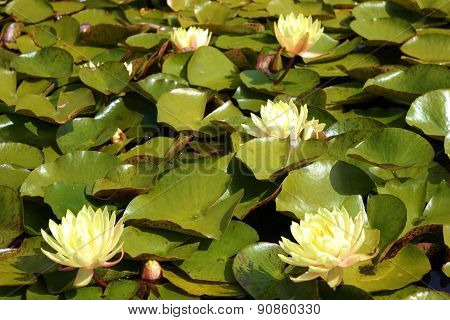 Lily Pad Garden