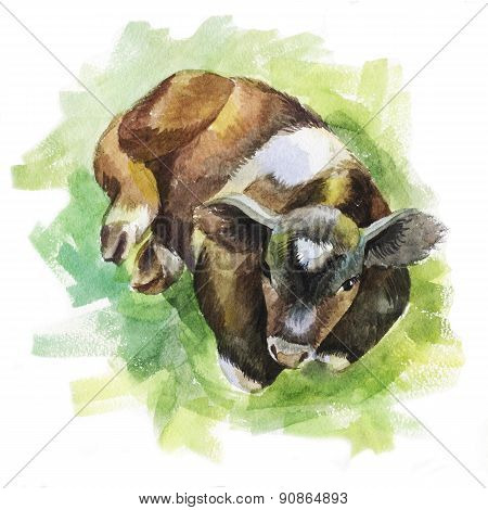 Illustration Of A Calf Lying On The Grass