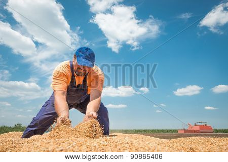 Happy Farmer During Harvest Wheat Is Rejoice For His Work