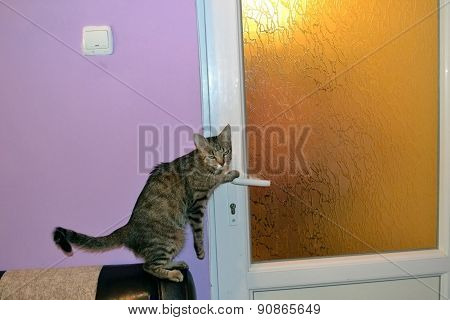 Cat  opens the door to the living room
