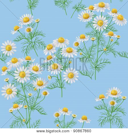 Wild Chamomile Pattern On Blue.