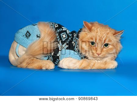 Ginger Bobbed Cat Sweater Lying On Blue
