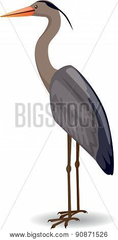 Heron - Illustration