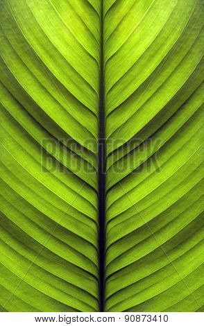 Texture Of The Leaves