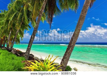 Row of coconut palm trees over the tropical beach of Rarotonga, Cook Islands