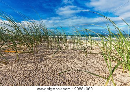 Sunny beach with sand dunes, grass and blue sky, Sunshine Coast, Australia
