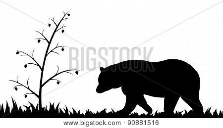 Silhouette of bear in the grass.