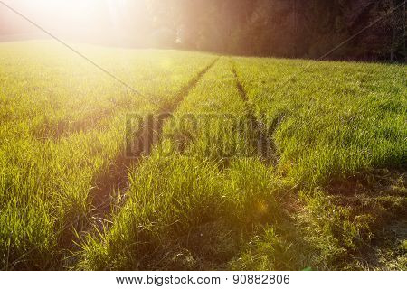 Track In Green Field In Evening Sunshine