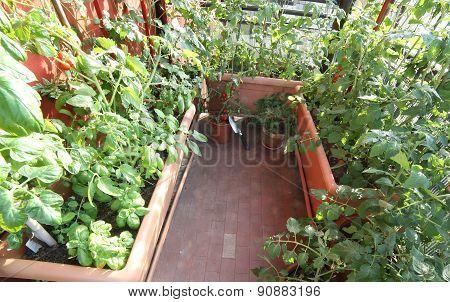Urban Vegetable Garden In A Terrace