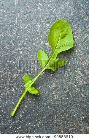 arugula leaf on kitchen table
