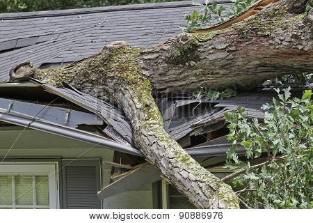 Large Oak Tree Crushes The Roof Of A Small House