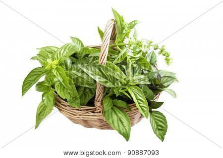 basket with different varieties of basil