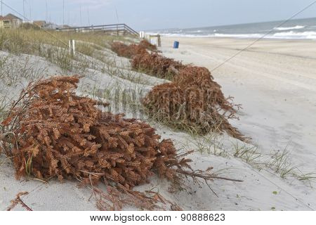 Recycled Christmas Trees Prevent Beach Erosion