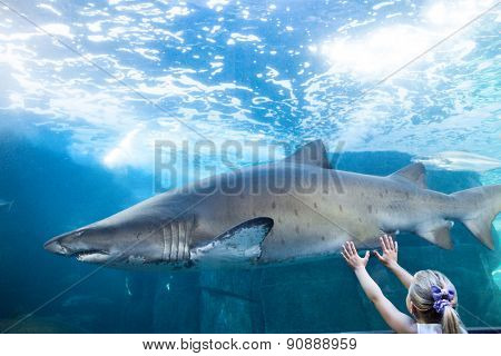 Young woman touching a shark tank at the aquarium