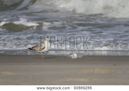 Seagull Next To A Plastic Bottle On The Beach