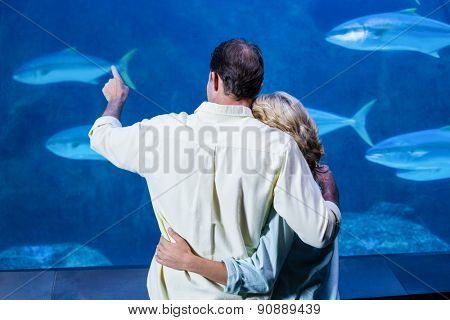 Rear view of couple watching the tank fish at the aquarium