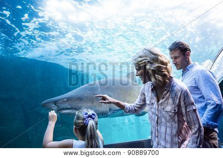 Family pointing a shark in a tank at the aquarium