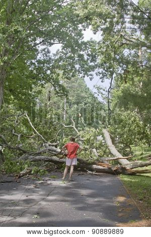 Walker Blocked By Tree Lying Across Road