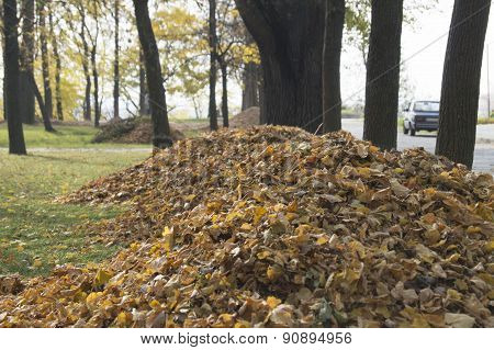 Heaps of leaves in a city park