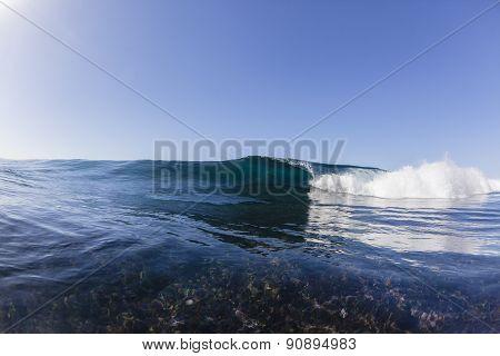Wave Reef Blue